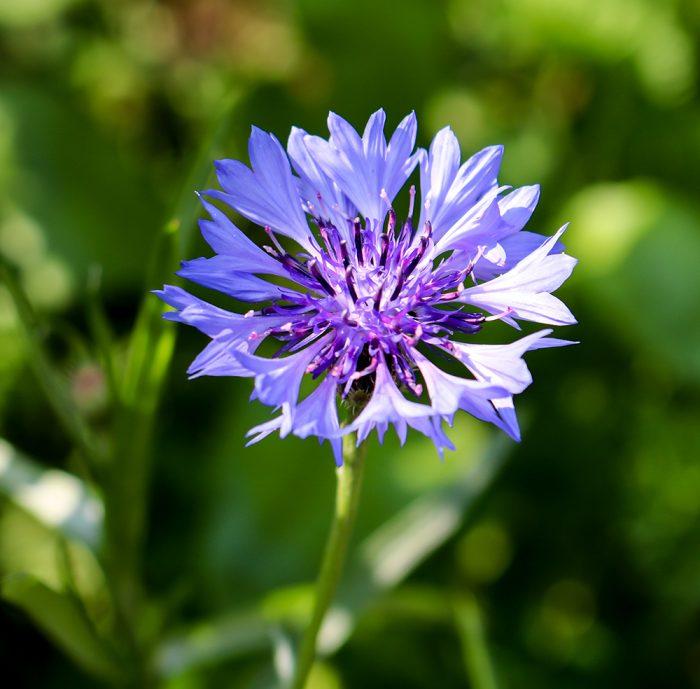 Growing Beautiful Wildflowers