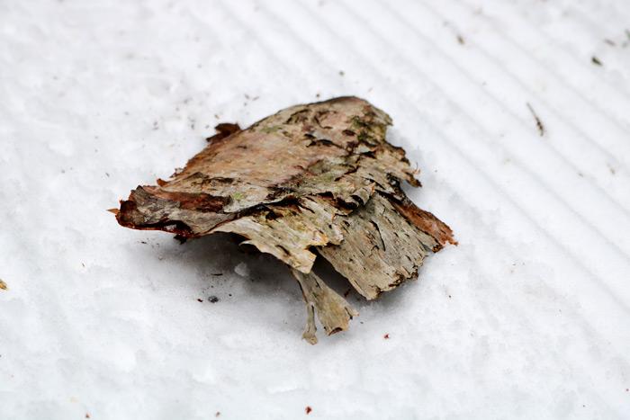 Birch Bark On Snow