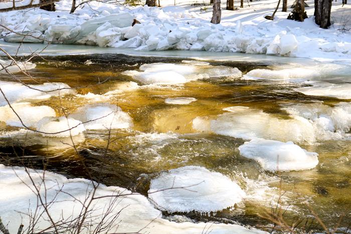 Poplar Stream In Maine