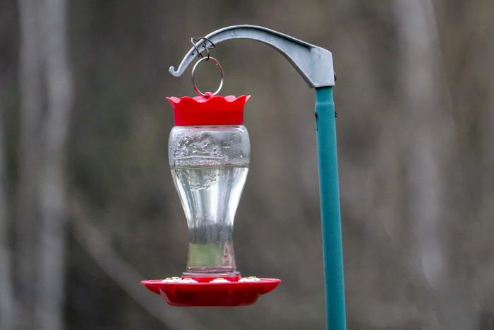 Pennington Glass Hummingbird Feeder In The Backyard