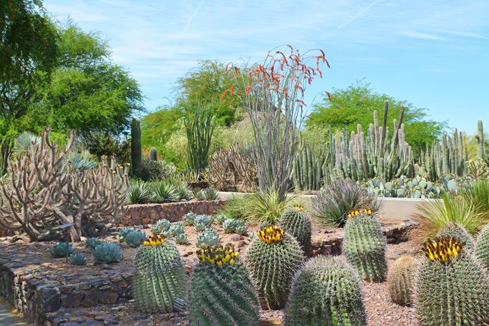 Dreamy Desert Cactus
