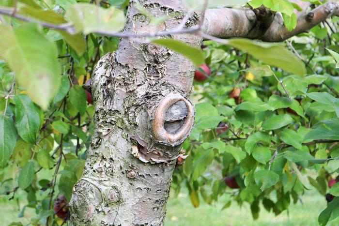 Tree Bark Knot