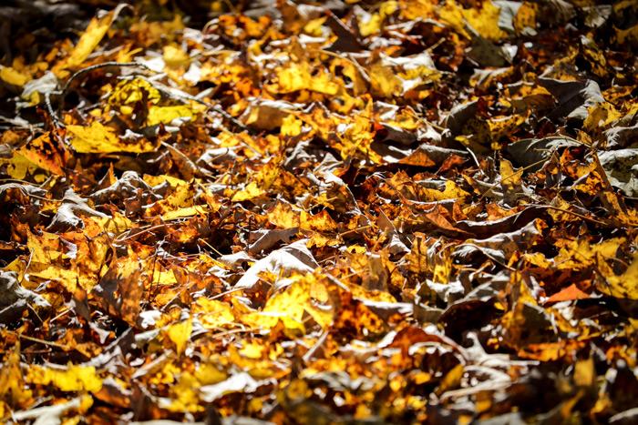 Fallen Crunchy Leaves