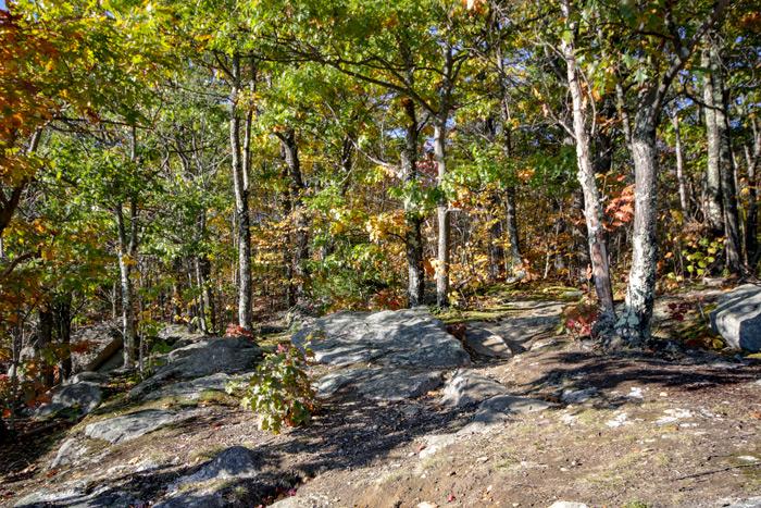 Rocks And Oak Trees