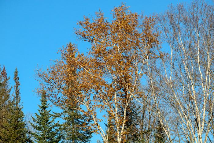 Blue Fall Sky