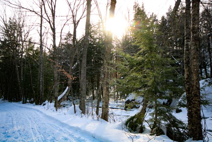 Path Along Stream