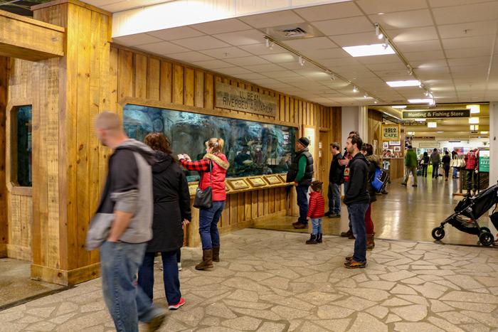 L.L. Bean Riverbed Aquarium