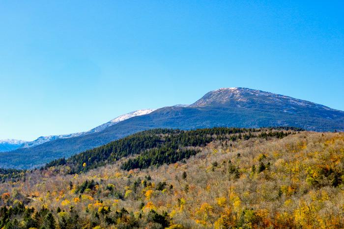 Mt Washington Autumn Leaves