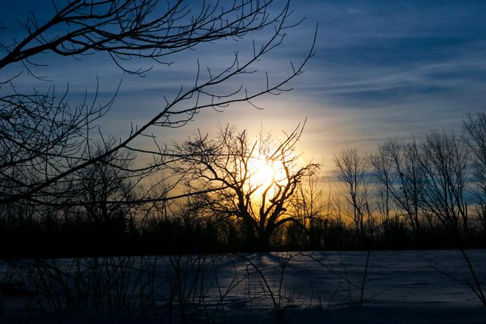 Apple Tree Sunset