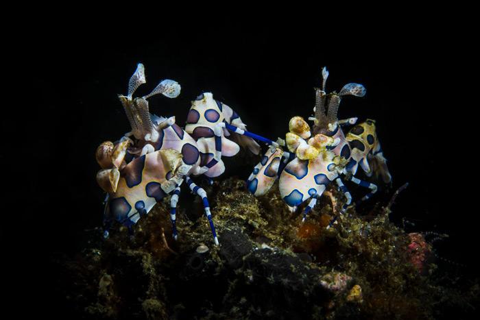 Colorful Sea Creatures