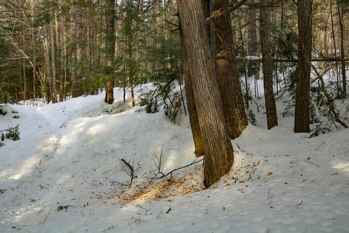 Fallen Bark On The Snow