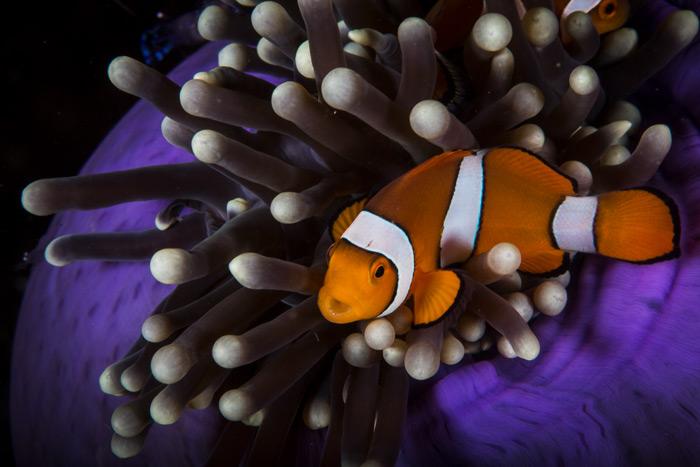 Vibrant Color Fish