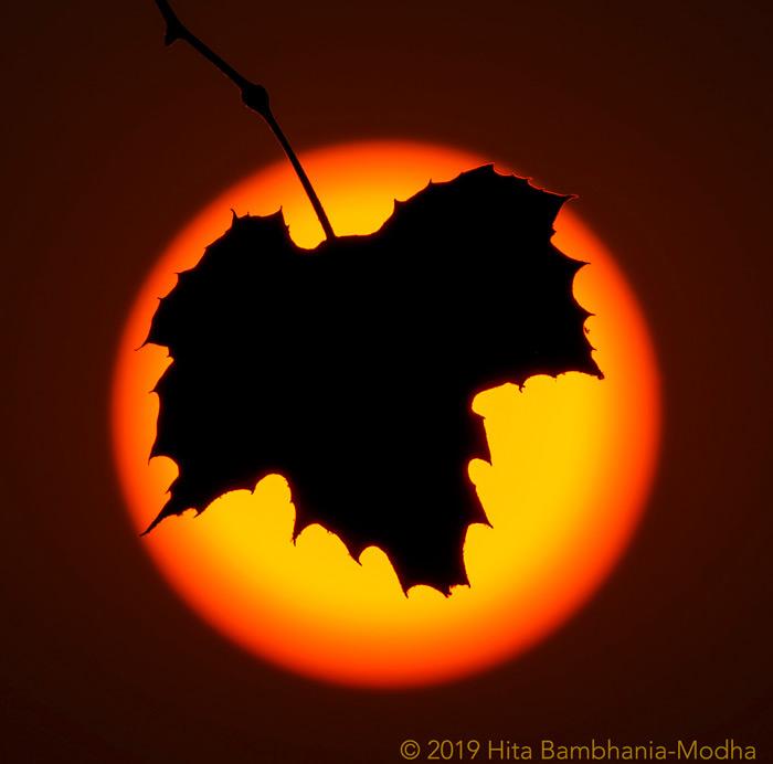 Leaf Sun