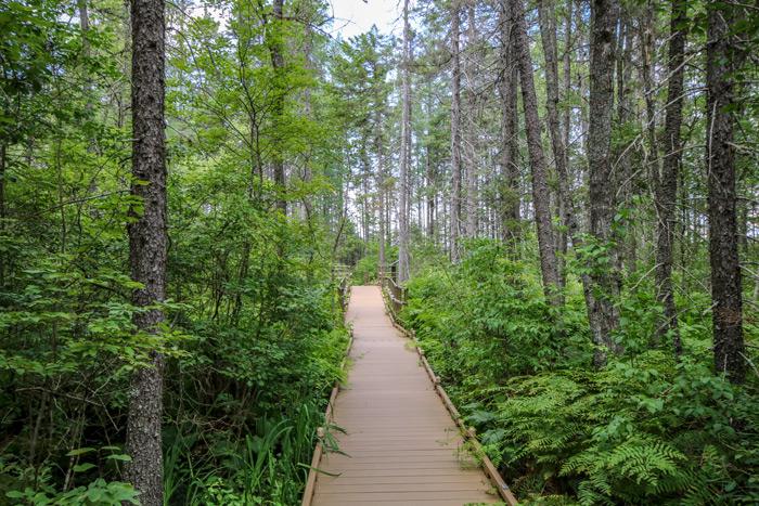 Bangor Boardwalk In Bangor Maine