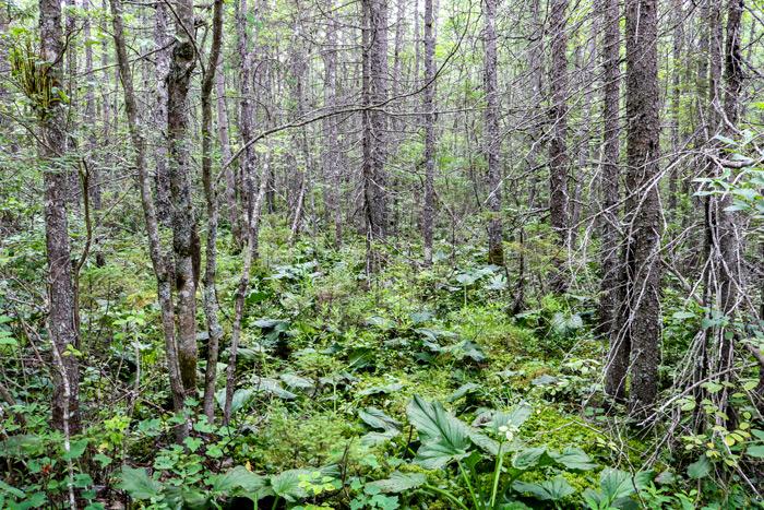 Bog Woods