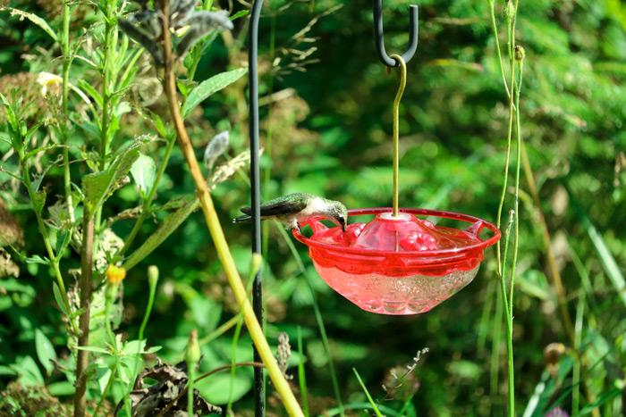 A Hummingbird Feeding From A Humm Feeder