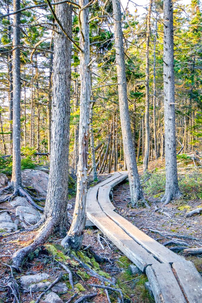 Boardwalk Through The Pines
