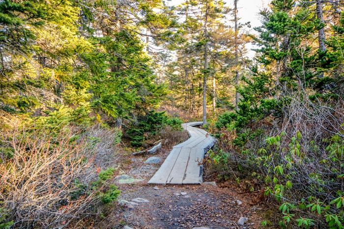 Acadia Boardwalk Trail