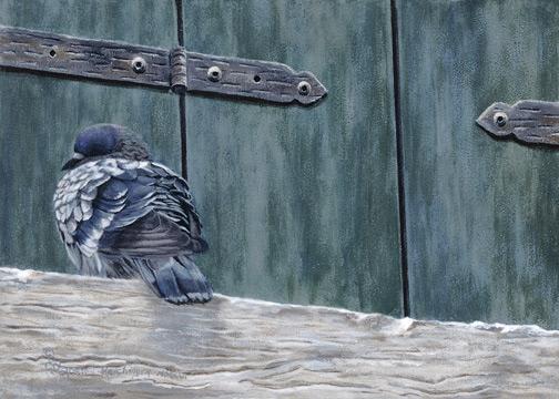 Pigeon Snoozing