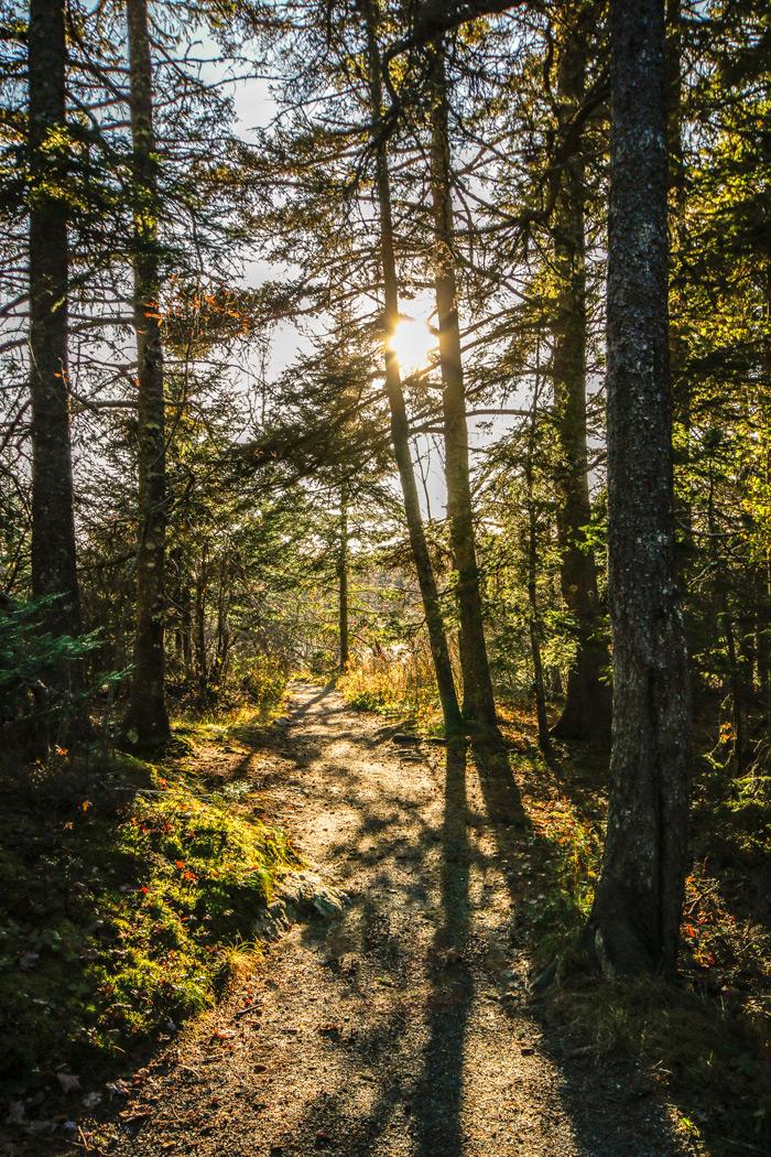 Shadowy Trail