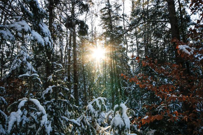 Starburst In The Woods