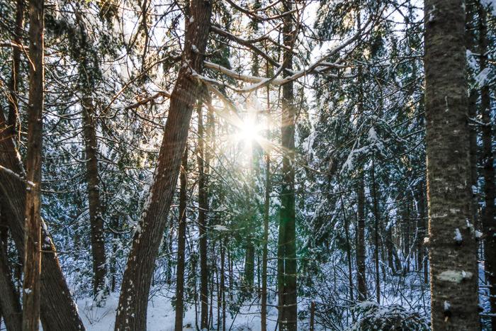 Starburst Through The Winter Trees