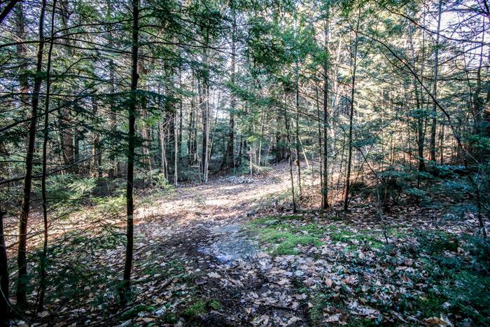 Shadows Falling Upon A Trail