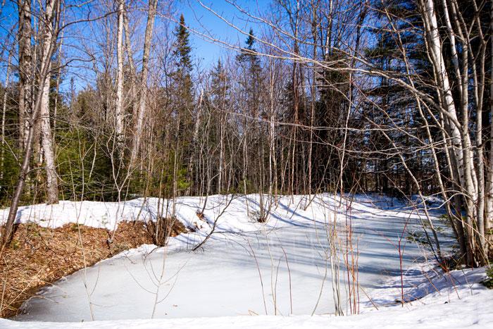 A Spring Frozen Pond