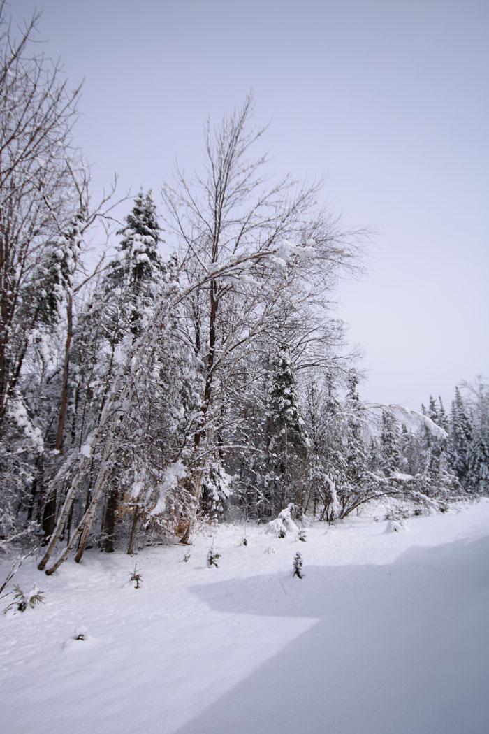 Next Day Snow