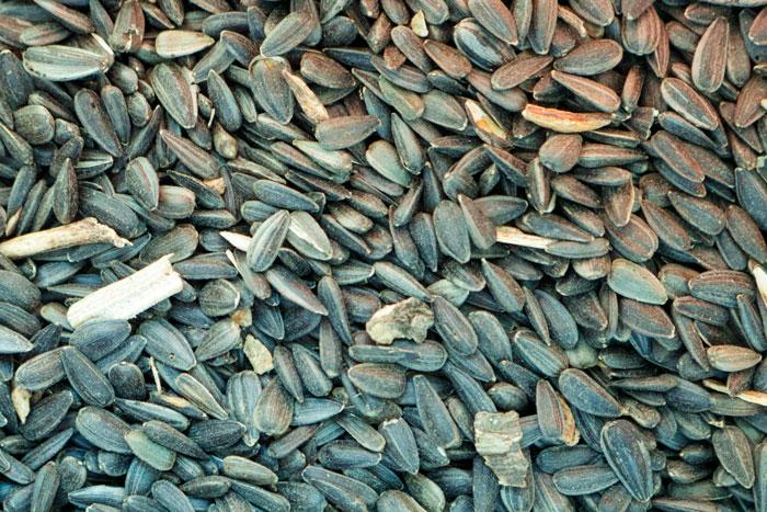 Black Sunflower Seeds