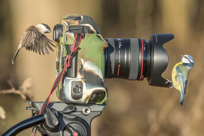 Birds Posing With Camera
