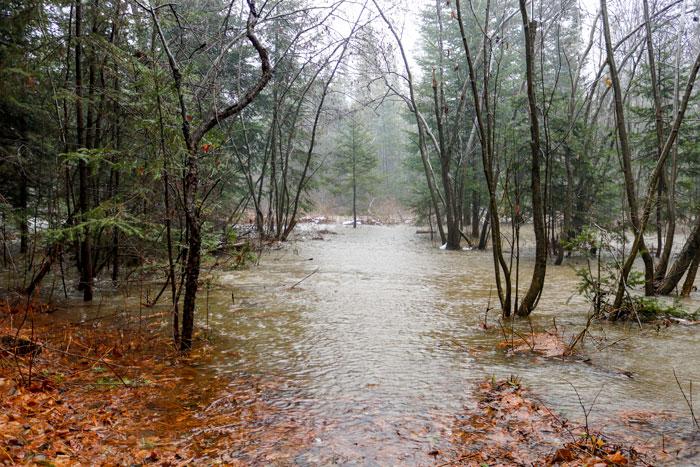 Brook Flooding