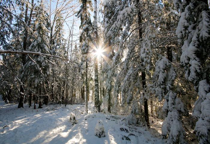 Sunburst In The Trail