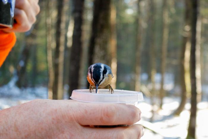 Feeding The Birds While Drinking Coffee