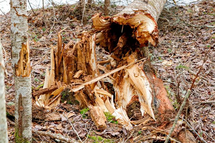 Broken Tree Trunk At The Base