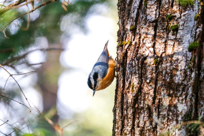 Walking Down Tree 4-28