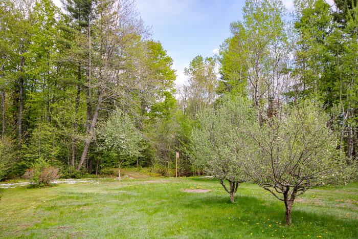 Backyard In Spring 5-25