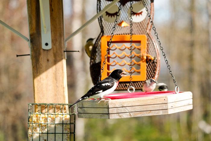 Bird Feeders 5-25
