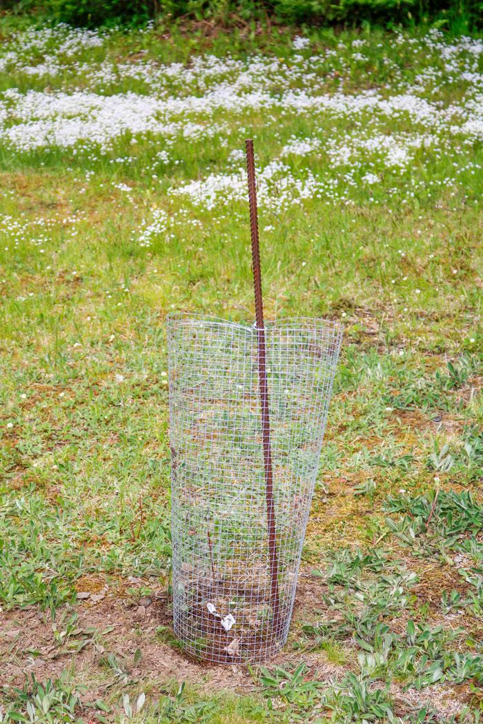 Planting Cage 5-25