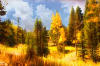 Golden Forest 5-7