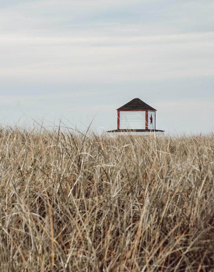 House In A Field 5-19