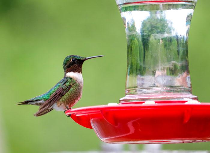 Hummingbird Close Up5-25