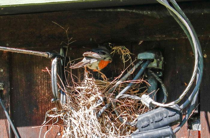 Nest Building 5-25
