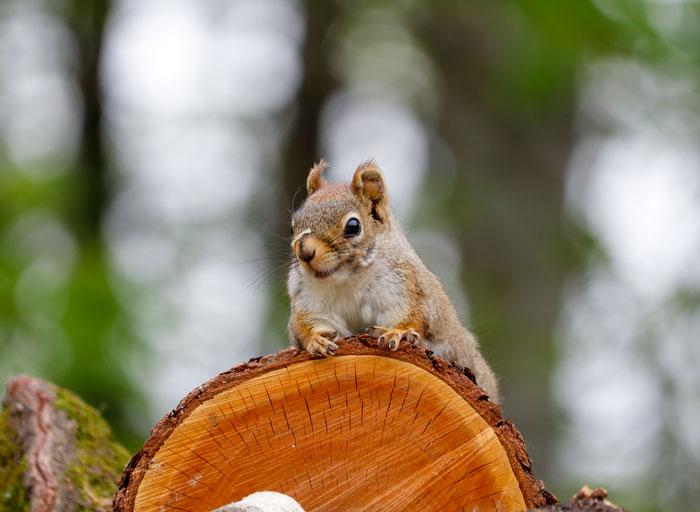 Squirrel Wood Pile 5-25