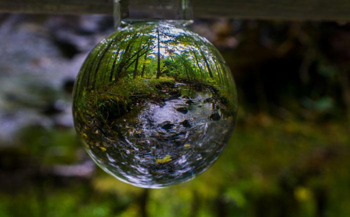 Crystal Ball Mushrooms 7-24