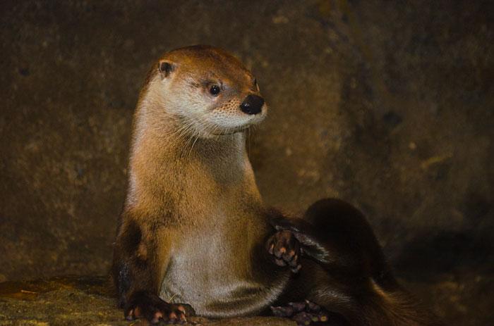 Otter 7-24