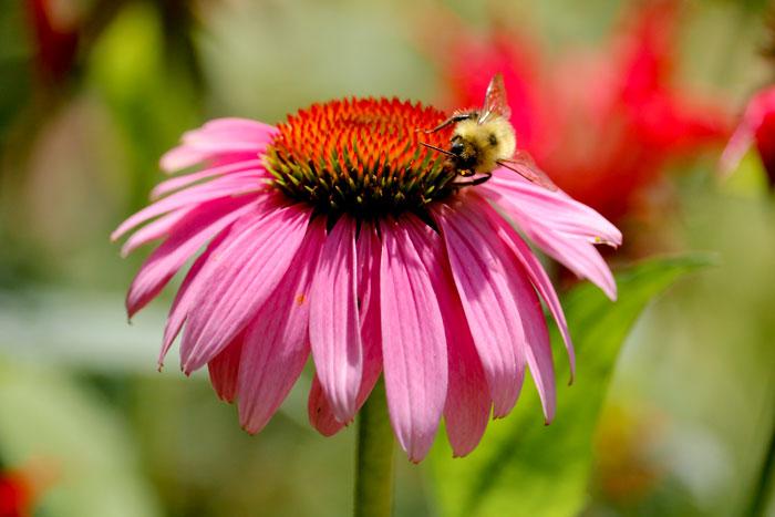 Bumblebee 8-24