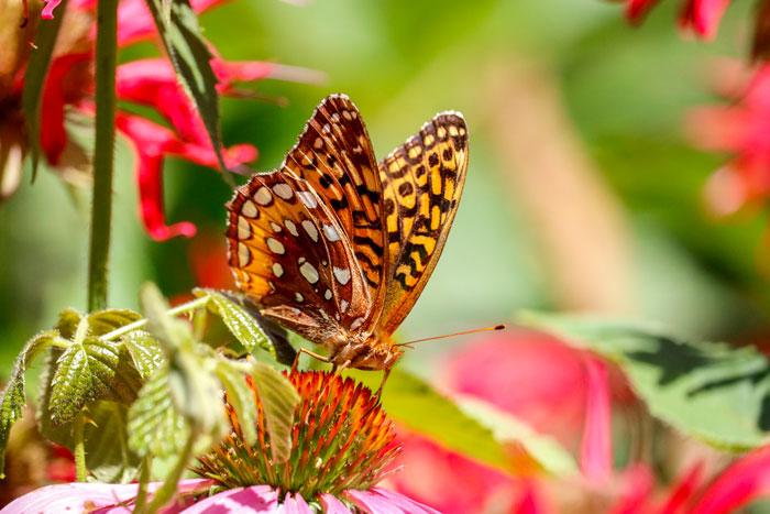 Butterfly In The Garden 8-24