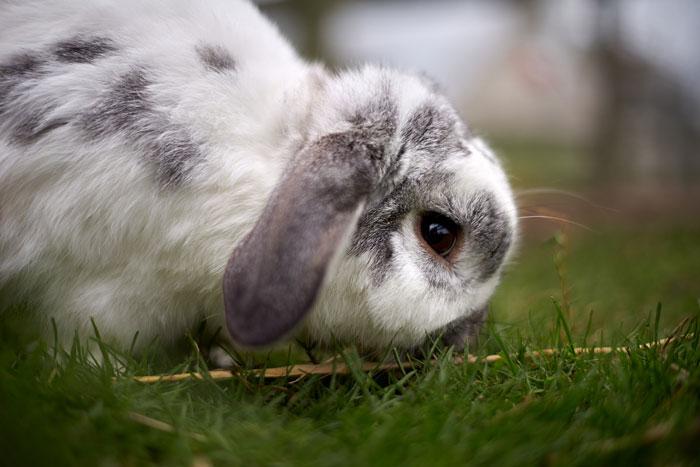 Bunny 10-1