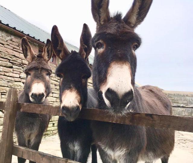 Donkeys 10-1